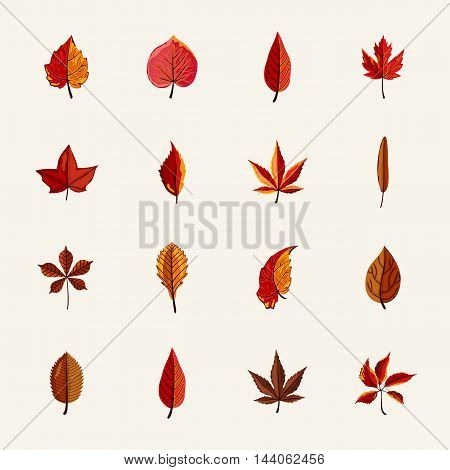 Autumn leaves isolated collection vector illustration. Hand drawn autumn leaves in cartoon style. Design elements. Autumn leaves concept. Different autumn leaves. Abstract leaves. Autumn elements.