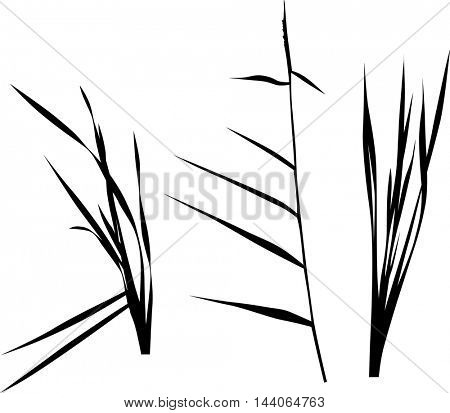 illustration with set of swamp plants silhouettes isolated on white background