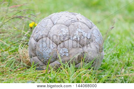 Old football isolated used by a dog