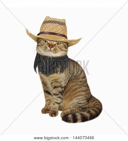 A Scottish Straight cat in cowboy hat and scarf on white background.