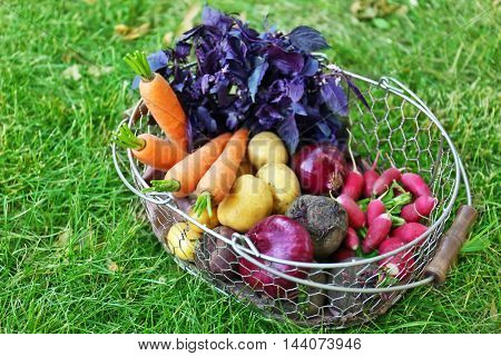 Metal basket with fresh vegetables on the grass