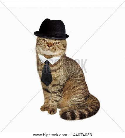 Scottish Straight cat in the bowler hat and tie on white background