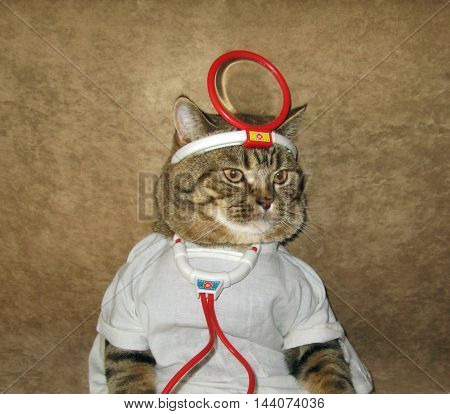 A cat looks like a real doctor.