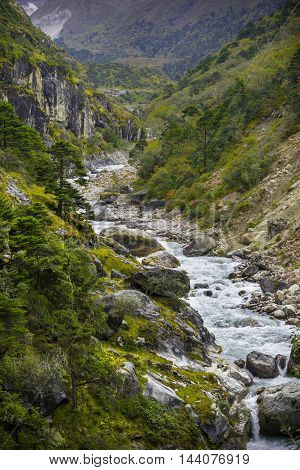 River And Forest In Himalayas
