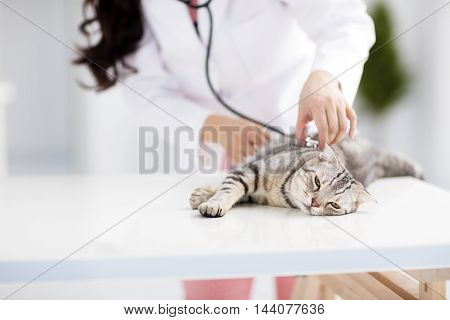 female veterinarian medical doctor with cat in office