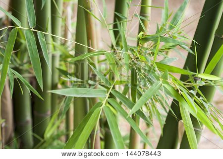 background texture nature leaf bamboo green tree