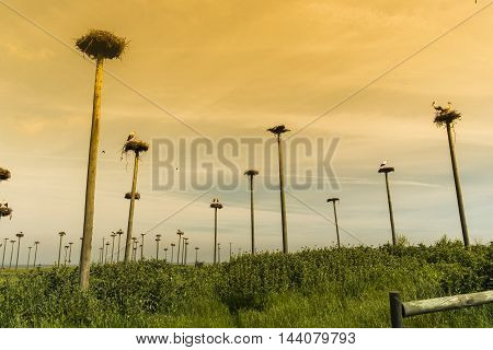 stork in a nest located in Extremadura in Spain
