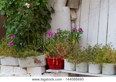 flowers and potted plants in a rustic style