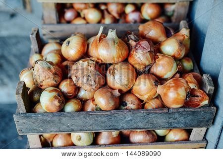 Organic Yellow Onions In A Basket. Shallots On Wooden Box.  Harv