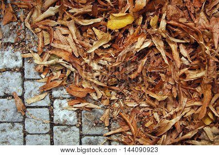 Dry brown crushed leaves on a sidewalk