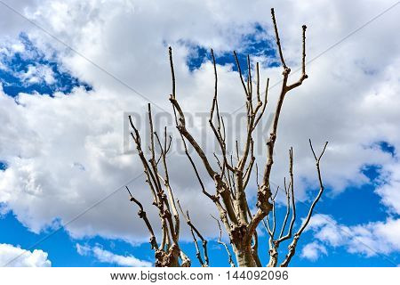 Tree twigs against a blue cloudy sky