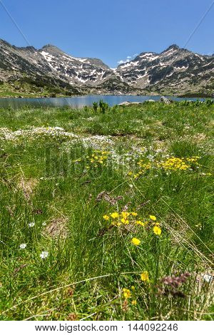 Amazing landscape of Dzhangal peak, Popovo lake and yellow flowers in front, Pirin Mountain, Bulgaria