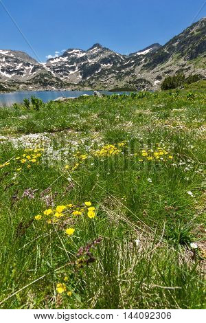 Amazing landscape of Demirkapiyski chuki peak, Popovo lake and yellow flowers in front, Pirin Mountain, Bulgaria