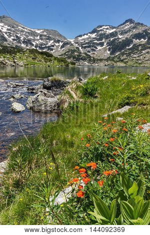 Amazing landscape of Demirkapiyski chuki and Dzhano peaks, Popovo lake and red flowers in front, Pirin Mountain, Bulgaria