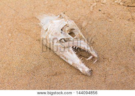 Fish Bone skull over the sand on the beach