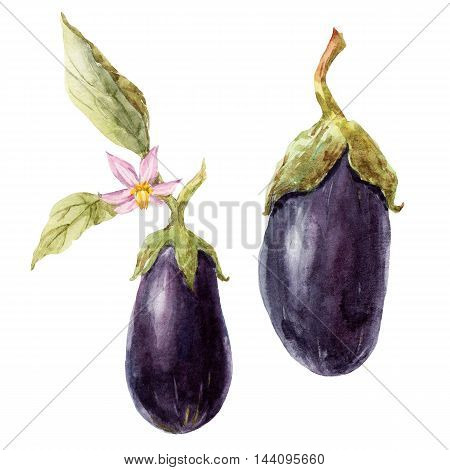 Beautiful image with nice watercolor hand drawn eggplant
