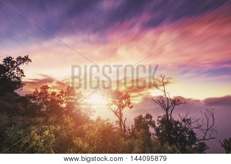 Silhouette branches with tree in sunrise, vintage tone