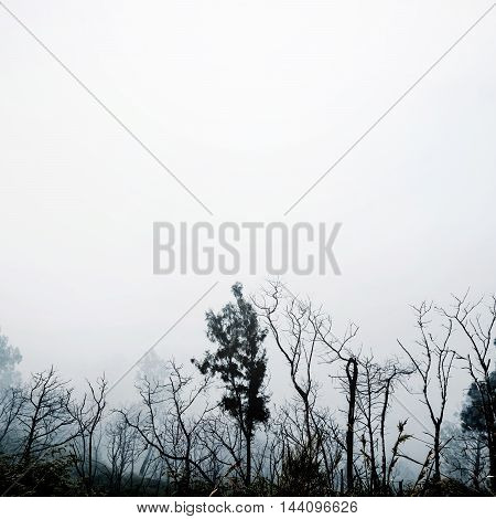 Silhouette dead tree branches and foggy environment, with copy space