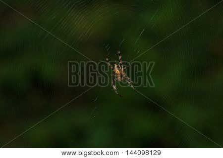 Spider sitting in center of the woven web in the forest