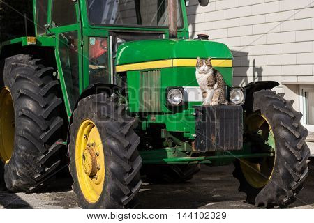 House cat sitting on a modern tractor
