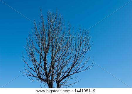 Death Of A Burned Tree Alone On Blue Sky