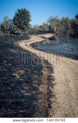 Path between burned blackened fields concept of making scorched earth
