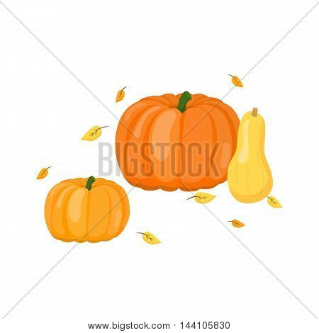 Composition of cartoon pumpkins and butternut squash with leaves isolated on white background.