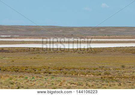 Steppe. Treeless, Poor Moisture And Generally Flat Area With Grassy Vegetation In The Dry Zone. Prai