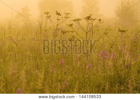 Nature Beautiful Background With Field Grass And Yellow Sunlight
