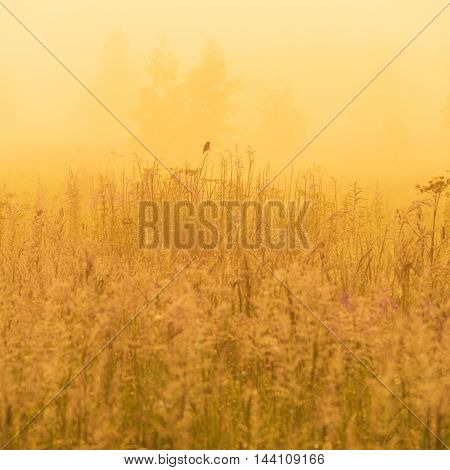 Nature Beautiful Background With Bird On Field Grass And Yellow Sunlight