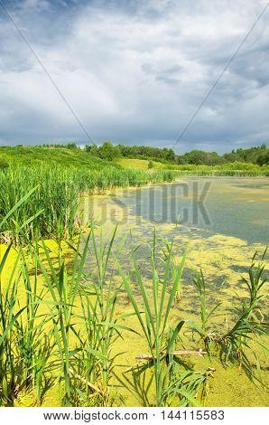 Swamp. Lush Green Swamp Scene.