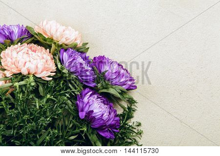 Purple asters on grey background in studio, flowers background with copy space, selective focus