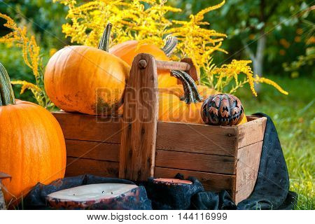 Halloween. Pumpkins In A Box Near Jack-o-lantern And Candles In Green Forest,