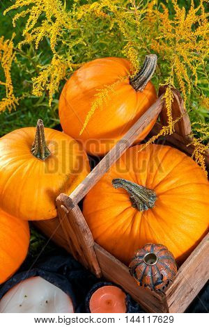 Halloween. Pumpkins In A Box Near Jack-o-lantern  And Candles In Green Forest, Outdoor. Decoration.