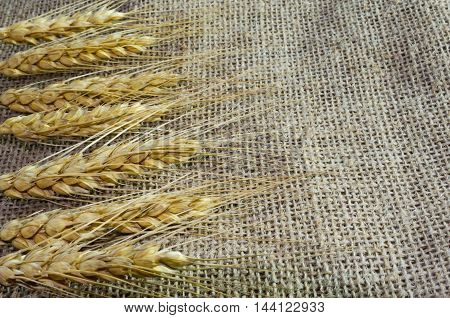 Ears of wheat on a background of canvasburlap