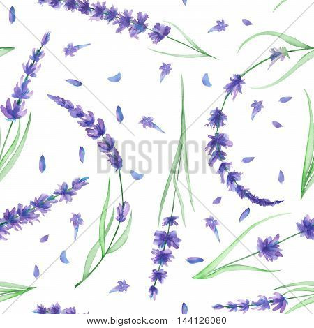 Seamless pattern with the watercolor lavender flowers, hand-drawn on a white background