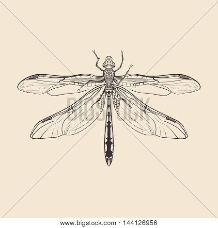 Hand Drawn Dragonfly. Vintage vector illustration. Retro insect design template