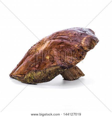 Porcini or king bolete forest mushroom isolated over white background