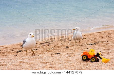 Two seagulls on the beach in summer.