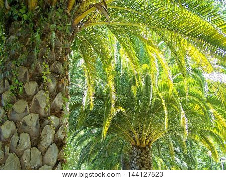 Palm trees located in a beautiful garden