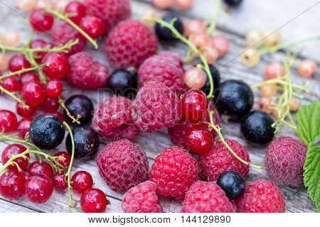 Fresh Organic Berries. Raspberries, Blueberries, Red Currants And White Currants
