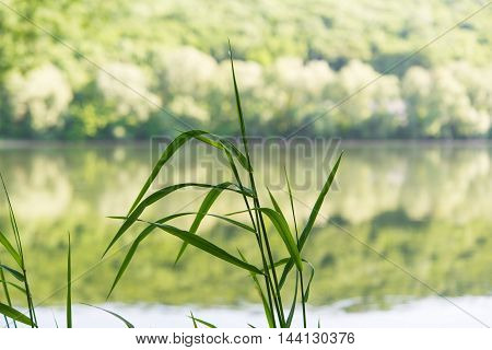 summer grass on the river bank close-up