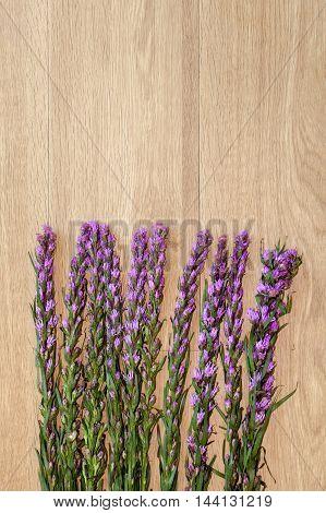 Violet Lavender Flowers On Buttom Frame On Brown Wood Background