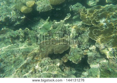 coral reef on the ground and underwater view