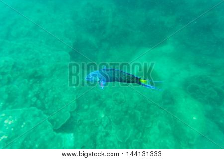 coral blue and green fish for us