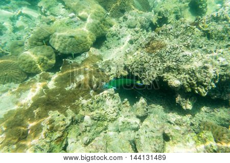 green sea fish for underwater view and top view photo