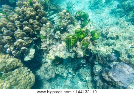 this is underwater view from snorkeling sportgreen coral