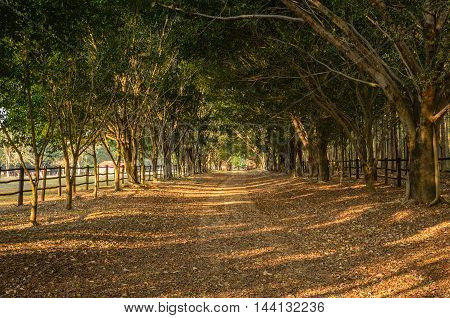 footpath between tunnel of trees in countryside of  Brazil