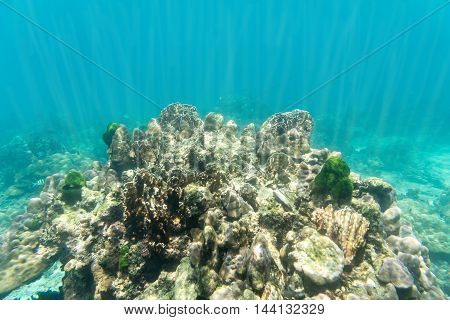 coral stone and coral reef underwater on sun light
