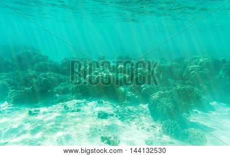 underwater view from sun light pass to the ground of sea